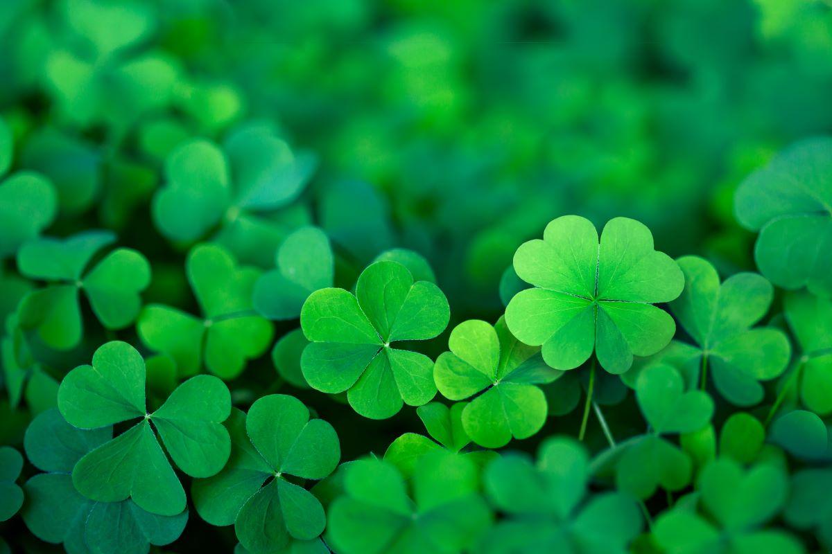 5 rituales para ganar la lotería